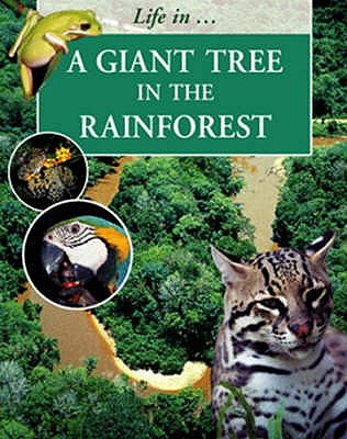 A Giant Tree in the Rainforest - Morgan, Sally
