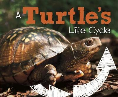 A Turtle's Life Cycle - Dunn, Mary R.