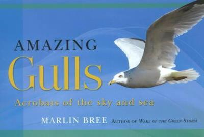 Amazing Gulls: Acrobats of the Sky and Sea - Bree, Marlin