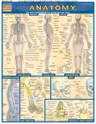 Anatomy: Reference Guide - BarCharts, Inc.