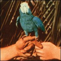 Are You Serious [LP] - Andrew Bird