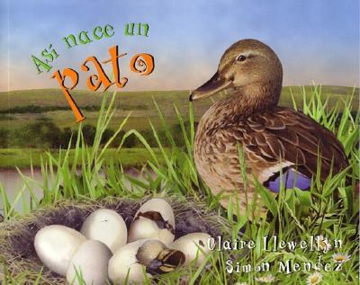 Asi Nace Un Pato (Starting Life: Duck) - Llewellyn, Claire, and Mendez, Simon (Illustrator)
