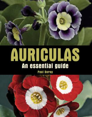 Auriculas: An Essential Guide - Dorey, Paul