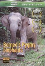 Borneo's Pygmy Elephants