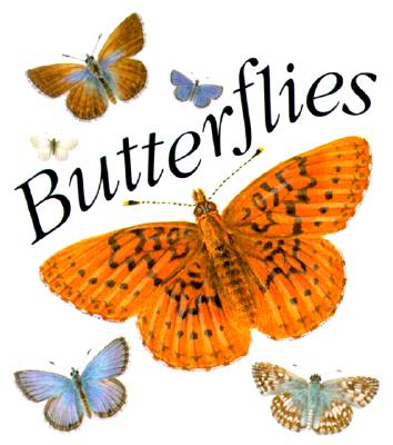 Butterflies - Running Press (Editor)