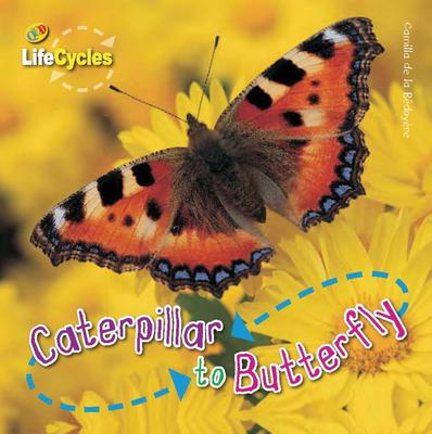 Caterpillar to Butterfly - De La Bedoyere, Camilla