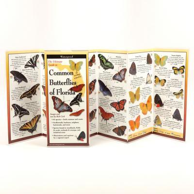 Common Butterflies of Florida -