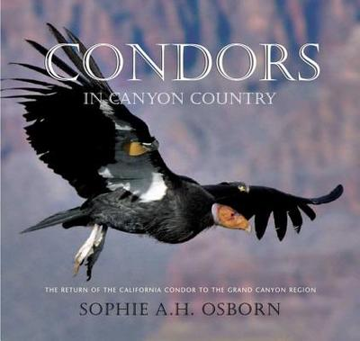 Condors in Canyon Country: The Return of the California Condor to the Grand Canyon Region - Osborn, Sophie A H