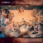Bach: Secular Cantatas, Vol. 10