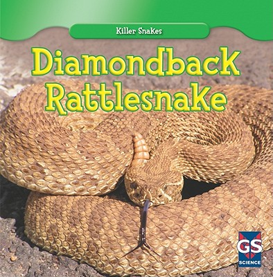 Diamondback Rattlesnake - Leigh, Autumn
