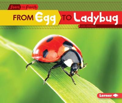 From Egg to Ladybug - Owings, Lisa