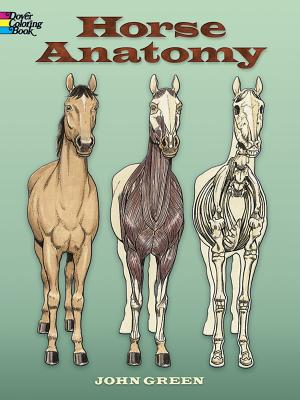 Horse Anatomy - Green, John