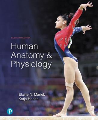 Human Anatomy & Physiology - Marieb, Elaine N, and Hoehn, Katja