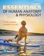 Essentials of Human Anatomy & Physiology (Subscription)