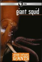 Inside Nature's Giants: Giant Squid