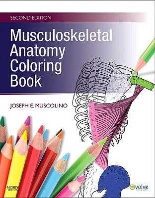 Musculoskeletal Anatomy Coloring Book - Muscolino, Joseph E, Dr., DC