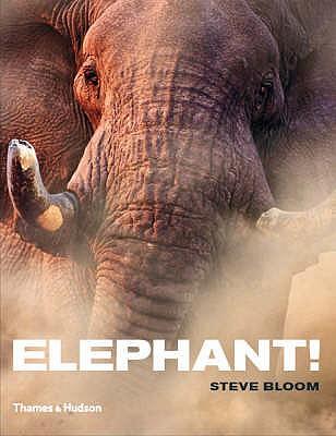 Elephant! - Bloom, Steve