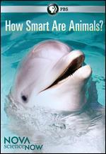 NOVA scienceNOW: How Smart Are Animals?