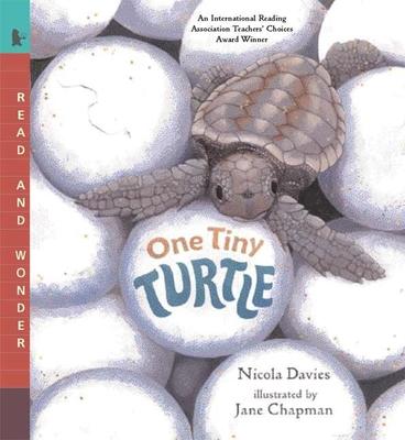 One Tiny Turtle: Read and Wonder - Davies, Nicola
