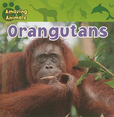 Orangutans - Kueffner, Susan