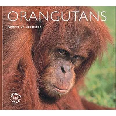Orangutans - Shumaker, Robert