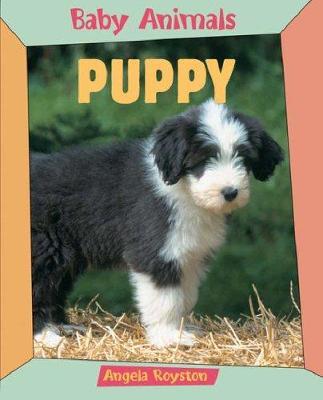 Puppy - Royston, Angela