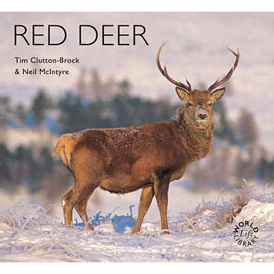 Red Deer - McIntyre, Neil, and Clutton-Buck, Tim