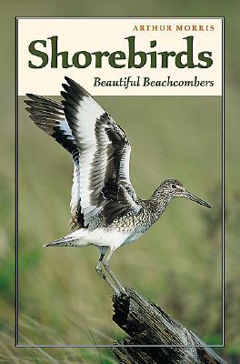 Shorebirds: Beautiful Beachcombers - Morris, Arthur