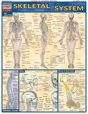 Skeletal System - Perez, Vincent