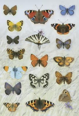 Sticker Play Scene: Butterflies - Buckingham, Caz, and Pinnington, Andrea Charlotte