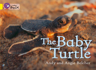 The Baby Turtle - Belcher, Andy, and Belcher, Angie, and Moon, Cliff (Editor)
