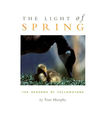 The Light of Spring: The Seasons of Yellowstone - Murphy, Tom