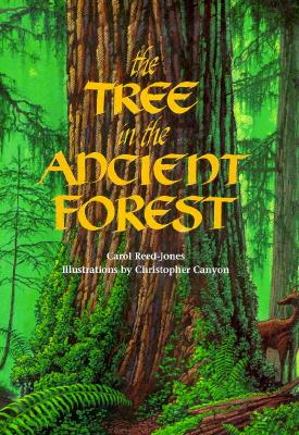 Tree in the Ancient Forest - Reed-Jones, Carol