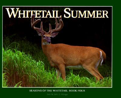 Whitetail Summer - Ozoga, John J