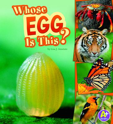 Whose Egg Is This? - Amstutz, Lisa J