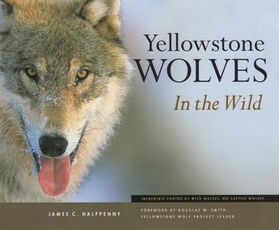 Yellowstone Wolves in the Wild - Halfpenny, James C
